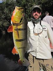 Amazonia 2012 (62)