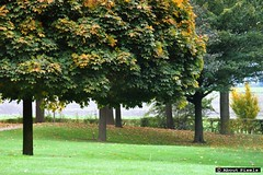 2015-10 Herfstig weer in het Geuldal (Mechelen) (About Pixels) Tags: 1023 2015 collecties herfstseizoen limburg mechelen mnd10 natuur nederland oktober specials trees fogg boom