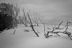 Fallen forest (jpauledwards8587) Tags: trees broken canon blackwhite sand desert australia tasmania