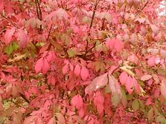 Ron's, Oct. 29, 2015 (Peter Musolino) Tags: virginia rons