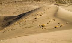 Sand (JuneBugGemplr) Tags: statepark sand idaho sanddunes bruneau bruneaudunes bruneausanddunes idahostateparks