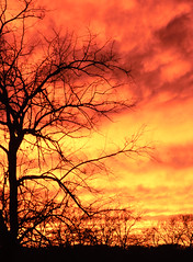 just a sunset, no big deal (andymudrak) Tags: autumn sunset sky orange tree fall silhouette clouds landscape branches plantlife