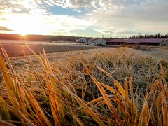 Sunrise at Iron River National Fish Hatchery (U.S. Fish and Wildlife Service - Midwest Region) Tags: frost frosty wisconsin wi november fall sunrise ironriver nationalfishhatchery hatchery nfh field fields cloud clouds sun grass