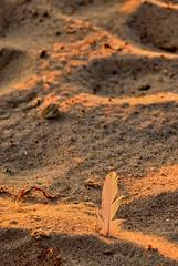 abendliches Stranddetail (Gelegenheitsknipser) Tags: strand deutschland licht meer sonnenuntergang dämmerung sh ostsee 2009 rd schleswigholstein abendrot norddeutschland eckernförderbucht schwedeneck kreisrendsburgeckernförde grönwohld dänischerwohld mpfotonet gelegenheitsknipserde marcopagel