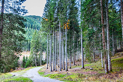 Inizia il cammino nel bosco   IMG_8131_HDR-1 (gianni.giacometti) Tags: italia fotografia montagna bosco friuli giacometti udine cammino friulano pierabech camminate forniavoltri mgsoft giannigiacometti dottpc eliseralemalignani mgsoftdroid