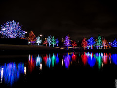 Vitruvian Lights 2015-2 (MikeyBNguyen) Tags: us texas unitedstates christmastree christmaslights christmastrees addison vitruvianpark vitruvianlights