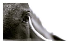 S u b e s p a c i o s   4 (creonte05) Tags: chile blackandwhite bw horse naturaleza detalle macro nature animals rural caballo eyes nikon wildlife explore ojos marco animales f4 diciembre reflejos exteriores 2015 fondoblanco equinos 2485mmf284d explored 12000s bconegro d7100 eduardomiranda