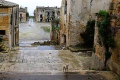 Poggioreale, Sicily, November 29, 2015 025 (tango-) Tags: italien earthquake italia italie sicilia belice terremoto sizilien sicilie poggioreale