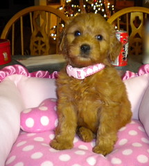 little-london--shes-one-of-riley-and-chewys-little-girls-_4250787755_o