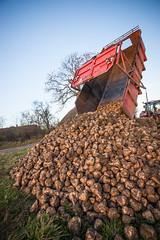 IMG_9850 (Bad-Duck) Tags: vinter traktor mat hst ker stuka newholland kvll skrd flt jordbruk lantbruk rstid livsmedel sockerbetor fltarbete livsmedelsproduktion