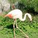 Kharkov Zoo. Flamingos
