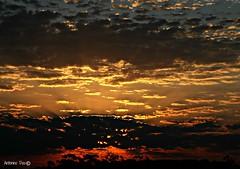 Nascer do sol (antoninodias13 (AUSENTE)) Tags: luz portugal lisboa cu nuvens rvores nascerdosol serenidade tonalidades serracarnaxide
