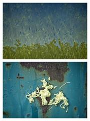 Pattern Fish Water Foam Iron (Appaz Photography ) Tags: appazphotography denmark jylland silkeborg remstrup gudenensilkeborg gudenen lakes dyr animals fish fisk