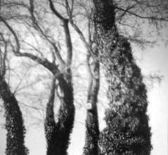 Small-big things. (Rusnius) Tags: trees nestingbox nature blackandwhite dianamini square analog analogue film 35mm lomography monochrome blurred