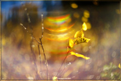 Rainbow Lens (Karen McQuilkin) Tags: rainbowlens manual helios aspen rainbow nature hike utah gold quakies