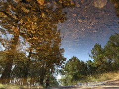 Two Sides, One Forest (andressolo) Tags: reflection reflections reflected reflect reflejo ripples reflejos puddle charco agua water trees tree textures distortions distortion distorted forest