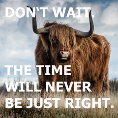 Don't wait. The time will never be just right. Napoleon Hill (dlymtvtnl) Tags: motivational inspirational motivation quote inspiration quotes inspiring quoteoftheday motivate inspire positive inspirationalquotes positivity motivated dreams entrepreneur instaquote success motivationalquotes buffalo animal animals strong strength independent progress powerful goals muscles power