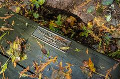sun pokes through onto memorial bench on rainy day (tangocyclist) Tags: leaves bench forestpark portland oregon