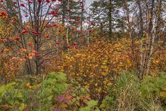 IMG_9833 (JacobBoomsma) Tags: gooseberrystatepark minnesota northshore summer fall