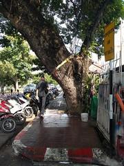 Chiang Mai walkabout - Thailand (ashabot) Tags: