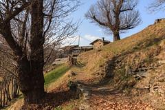da un albero all'altro (Clay Bass) Tags: 24105 balma baita canon5d green mountains trees winter