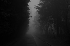 ode to autumn (Glupschmops (back soon)) Tags: fog nebel monochrome stillness early morninings morning rural sombre sw autumn herbst stille quiet blackandwhite