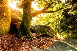 Le chêne de Huelgoat [Explore 01/11/2016]