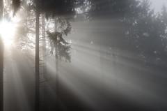 20161030-WOL_7737.jpg (viennalinux) Tags: spaziergang nebel herbst nature tauern fog natur ossiach ossiacher