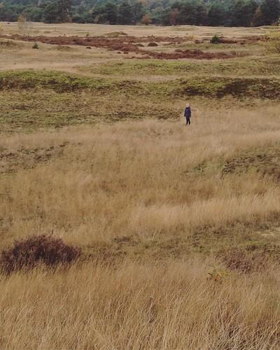 Laatste keer wandelen. Wat een zalig gebied! #kootwijkerzand #kootwijk #nederland #dingendiefijnzijn