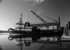 Tug at Cathlamet, WA, 11-3-2016 (convertido) Tags: cathlamet washington wa columbia river pugent island bridge clouds water boats webs cobwebs plant fall sunset afternoon black white color photography outdoor nature