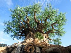 Tree of Life (meeko_) Tags: tree life treeoflife waterfall discovery island trail discoveryislandtrail discoveryisland disneys animal kingdom disneysanimalkingdom themepark walt disney world waltdisneyworld florida