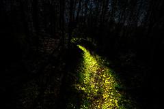 make my way through the darkness (www.davideserafin.com - AOPfotografia) Tags: night light path lumino illumina italia padova moon through darkness around green longexposition seconds time fujifilm xt1 wood