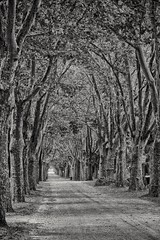 Weg in die Ewigkeit (michaelavondruska) Tags: zentralfriedhof wien allee bume weg schwarzweiss blackandwhite nikon