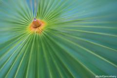 JSM_4359thatchpalmspark1jsm (JayEssEmm) Tags: towerhillbotanicgarden towerhillbotanic towerhill tower hill botanic garden boylston massachusetts ma lensbaby spark