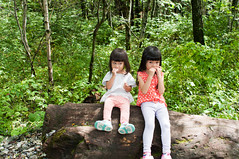 Snack time (Wunkai) Tags: matsumotoshi naganoken japan     forest walking kamikochi  treetrunk ziyiwang jeanwang
