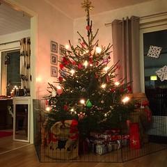 Kaninsäker jul. #lövkompostkanvarabra #kanin #rabbit #safety #julfred #julgran #christmastree (Simon Lampenius) Tags: kaninsäker jul lövkompostkanvarabra kanin rabbit safety julfred julgran christmastree