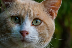 PhoTones Works #7070 (TAKUMA KIMURA) Tags: wild nature animal japan cat landscape scenery nora 日本 猫 自然 風景 動物 ねこ okayama kimura ネコ 景色 岡山 野生 takuma 琢磨 木村 ノラ 野良 photones fz1000