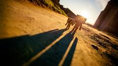 Sunset (Art by Vins) Tags: light sunset cute nature canon toy toys actionfigure photography bokeh mini kawaii 5d yotsuba danbo 1635mm 1635mml revoltech danboard 5dmarkii 5dmkii