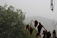 Fuera llueve. Dentro observo. (maikrofunky) Tags: trees naturaleza window nature rain 35mm canon ventana sadness drops lluvia rboles bokeh natura gotas melancola oneshot notreatment laplana 600d melancolic santamaradol