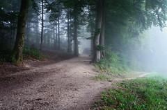 zwei Wege (welenna) Tags: summer mist fog forest switzerland nebel wald baum weg