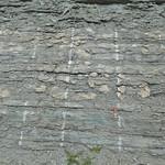 Stromatoporoid biostrome on KY 11 thumbnail