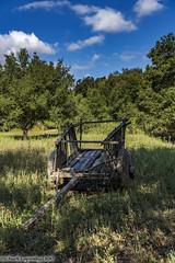 5088 Wagon in a Meadow (chuckl2432) Tags: usa nature field wagon mexico nikon meadow tecate bajacalifornia wildflowers baja digitalphotography rancholapuerta 840 landscapephotography chucklapinsky
