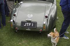 car dog (Mr.KPG) Tags: show uk classiccar time country blighty goodidea dogdayafternoon froggatt omzuiko50mmf2macro summer2015
