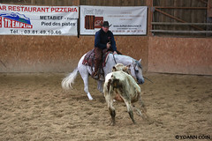 BJ1A8331 (yoann.coin) Tags: horse france western cutting ncha remoray