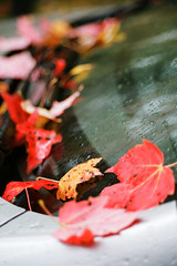 Fallen leaves on the windshield (pabs35) Tags: fall film leaves car 35mm paradise fallcolor pentax kodak michigan windshield pentaxmesuper mesuper ektar ektar100