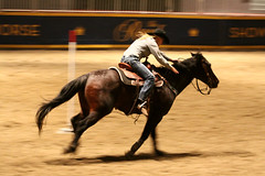 RAWF15 JSteadman 0116 (RoyalPhotographyTeam) Tags: sun royal rodeo 2015 rawf nov08
