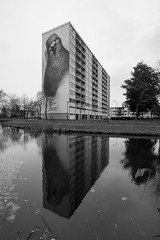 Pigeon (PiotrTrojanowski) Tags: street city blackandwhite bw holland reflection building art water netherlands wall painting pond mural stefan flats goes block pidgeon thelen supera