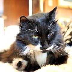 Moosh Not Feeling Good With Foot Forward (XOZ ~ www.ipernity.com/zelda) Tags: rip mooshie hislastday feelingverybad