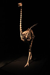 Science World - October 15, 2015 (rieserrano) Tags: skeleton ostrich bodyworlds plastination