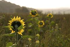 Autumn days (Rach_3) Tags: autumn nature canon300d